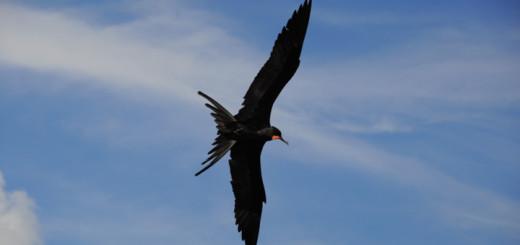 птица в небе