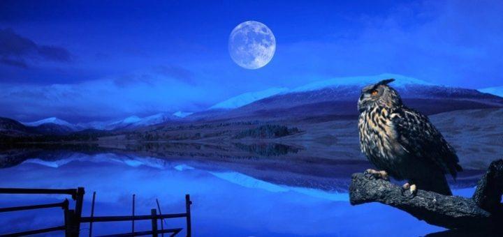 луна и сова