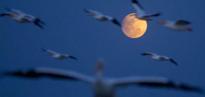 луна и птицы
